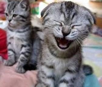 Gatito riéndose