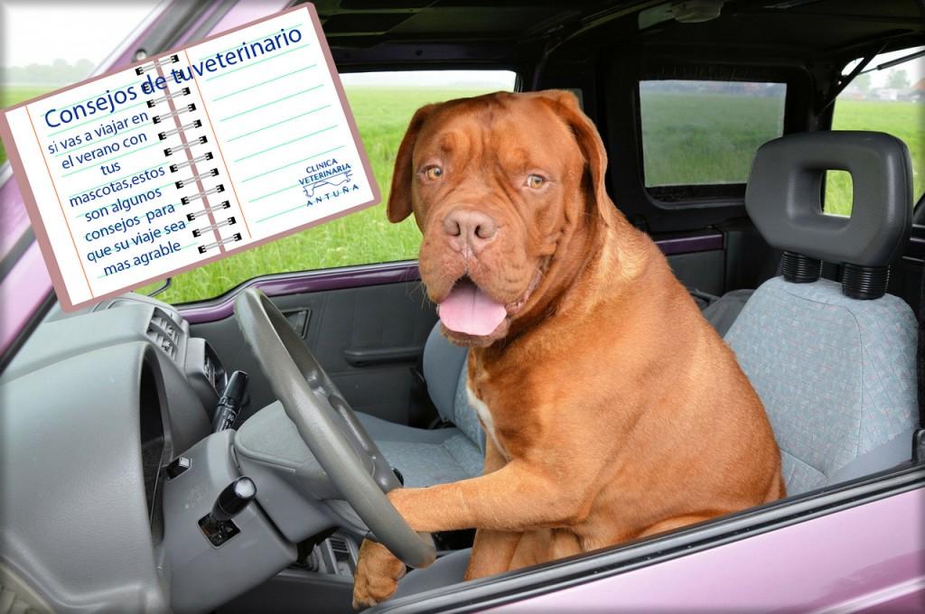 perros y viajes en coche